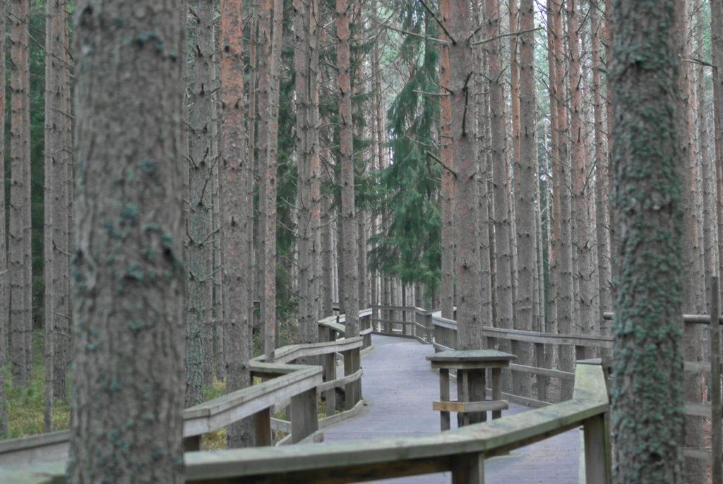 Holzweg im Järvzoo