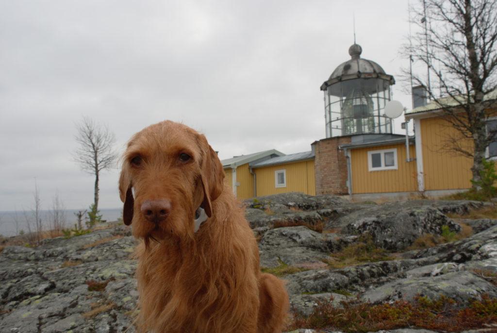 Hund vorm Leuchtturm