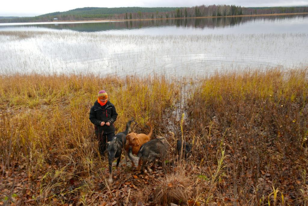 Vizsla und Alaskan Huskies