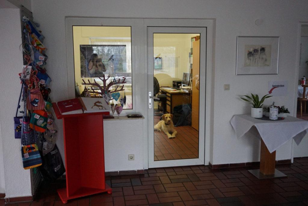 Hund hütet Büro