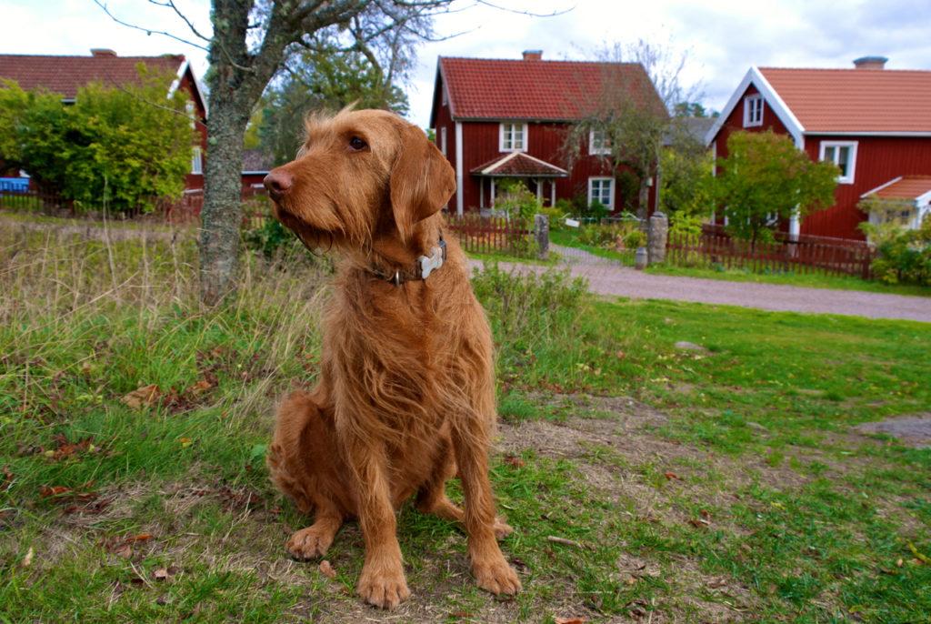 Hund in Bullerbü