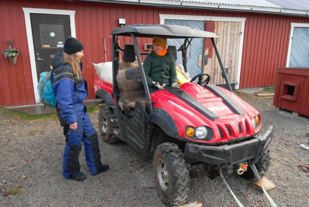 Trainingswagen für Huskies im Herbst