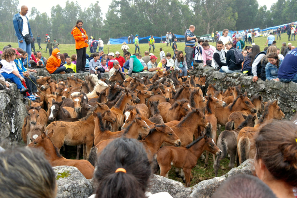 Fohlen im Curro