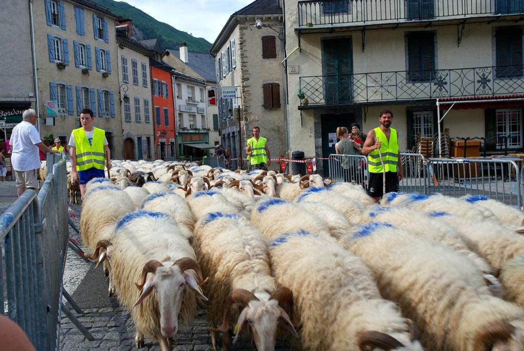 Transhumanz im Nationalpark Pyrenäen