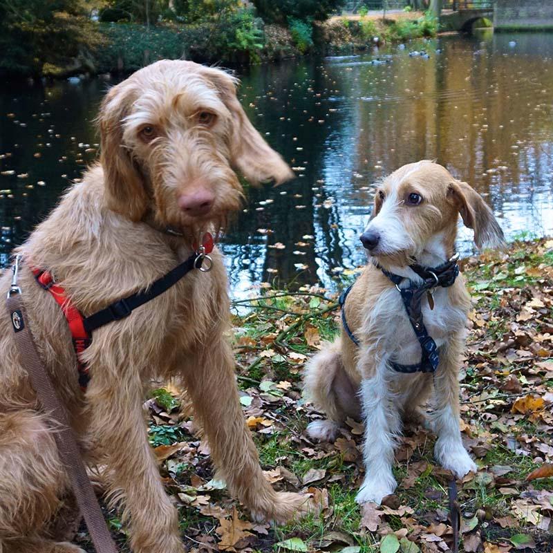 Der Tier- und Hundeblog für Reisen mit Hunden
