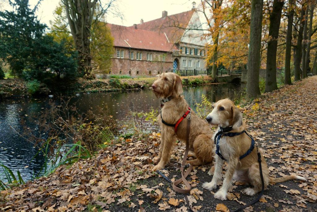 Hunde im Burgpark Dinklage