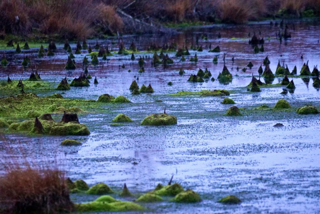 Ausschnitt Goldenstedter Moor