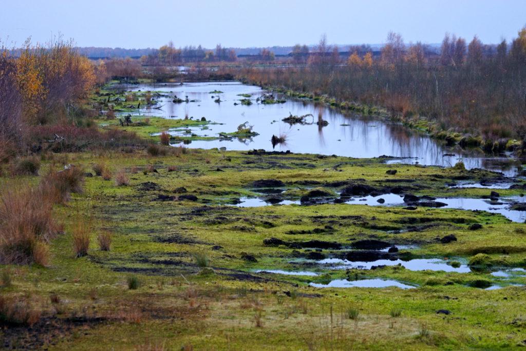 Torfmoos-Fläche im Moor
