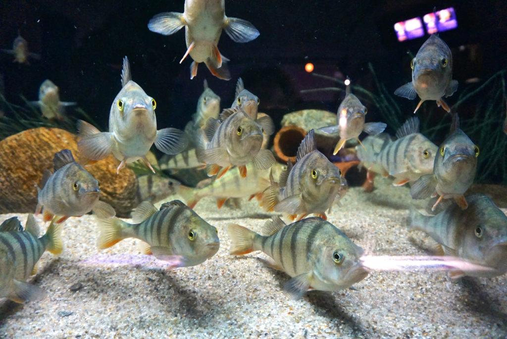 Gruppenfoto mit Fisch