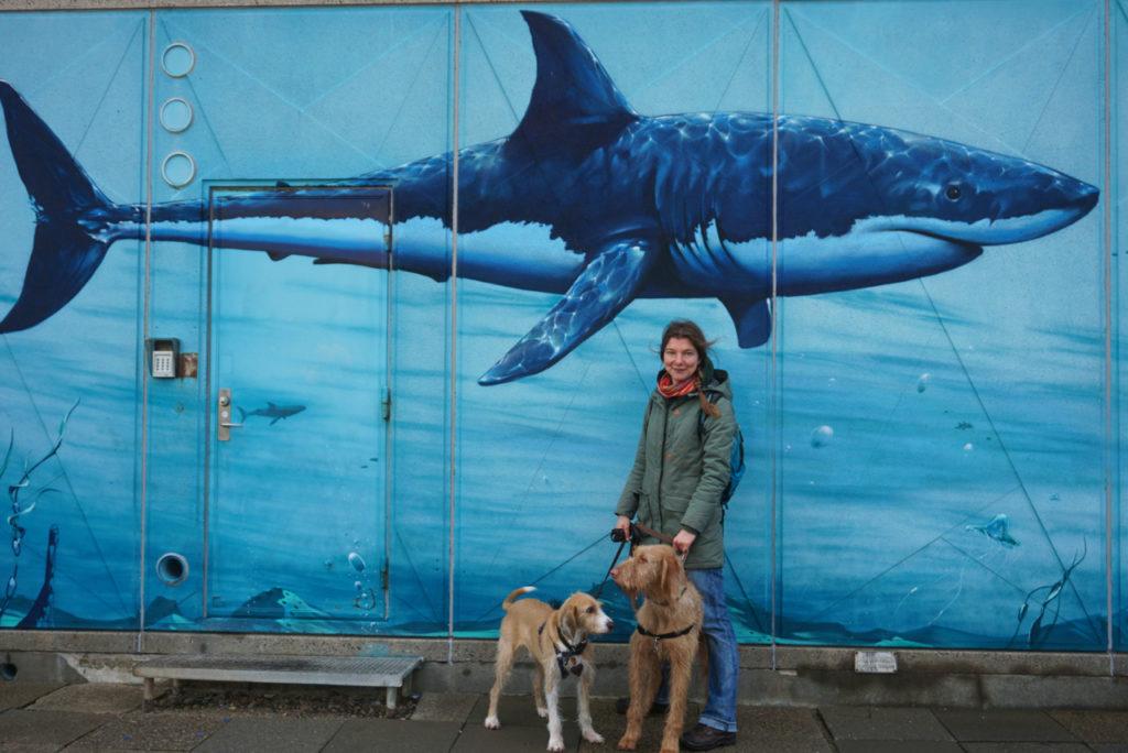 Hai in Hvide Sande - Nordsee mit Hund
