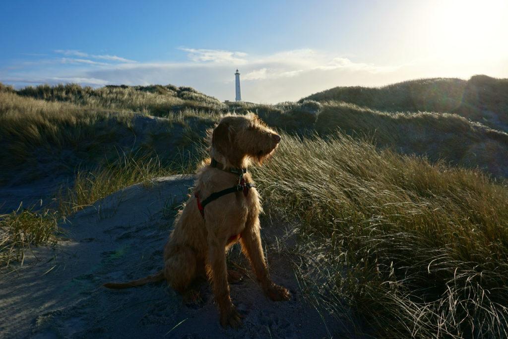 hund am Leuchtturm Lyngvig Fyr