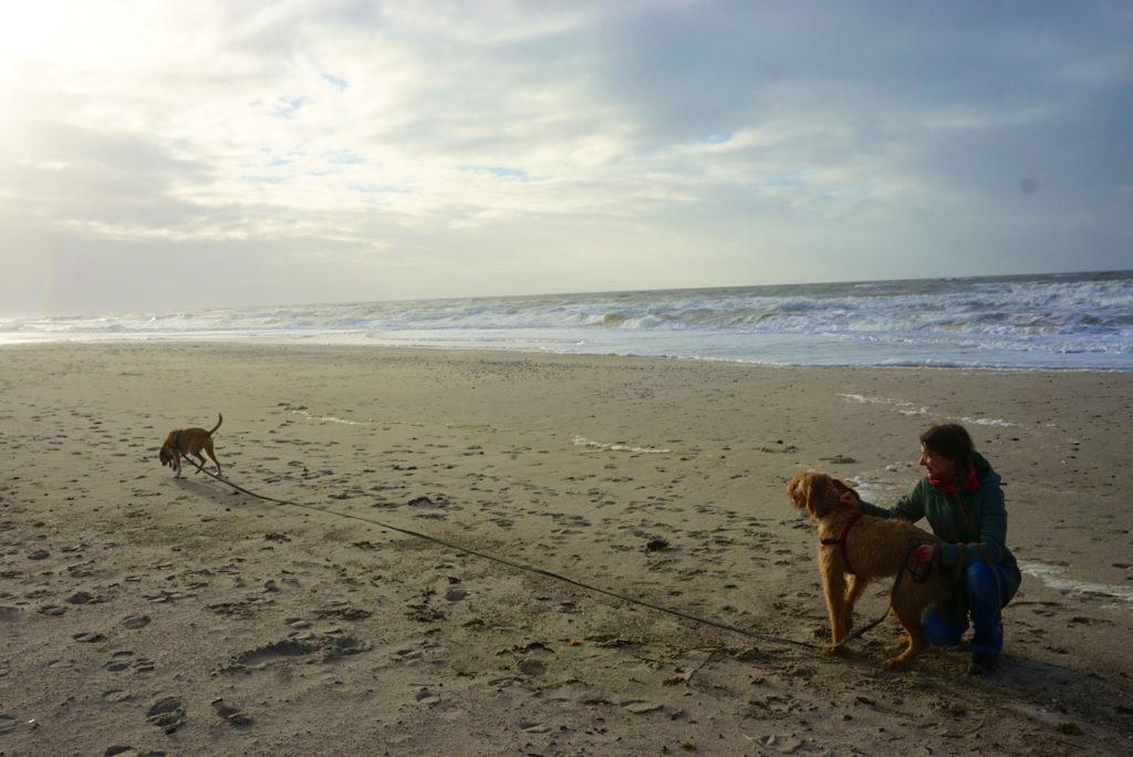 hund mit Schleppleine am Strand