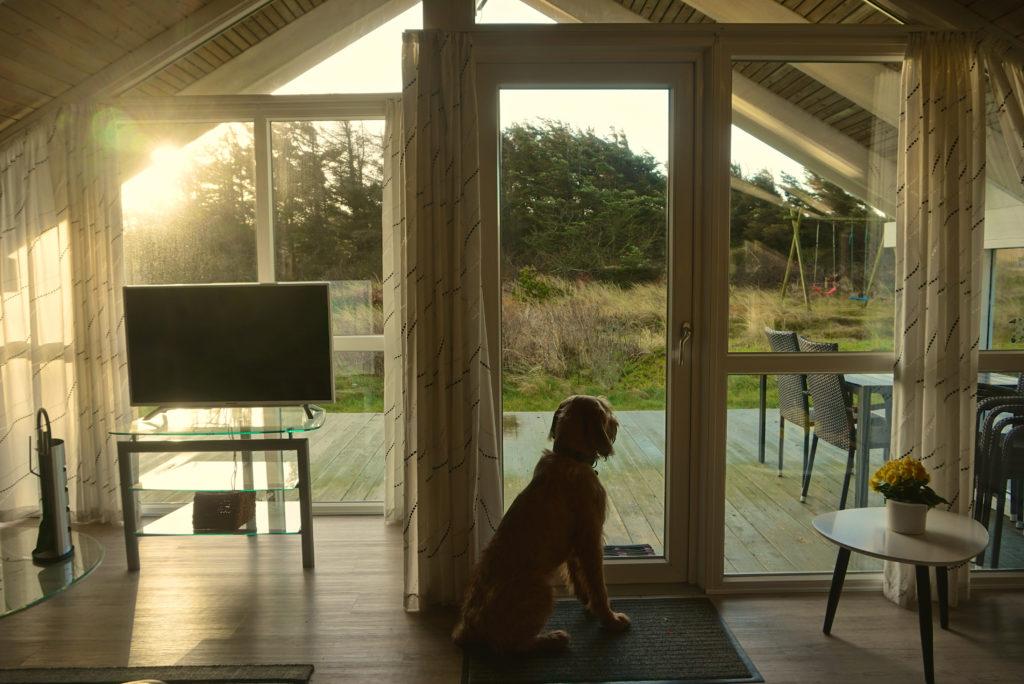 Hund im Ferienhaus Dänemark