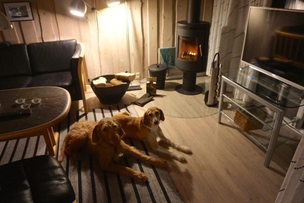Hygge mit Hund in Dänemark