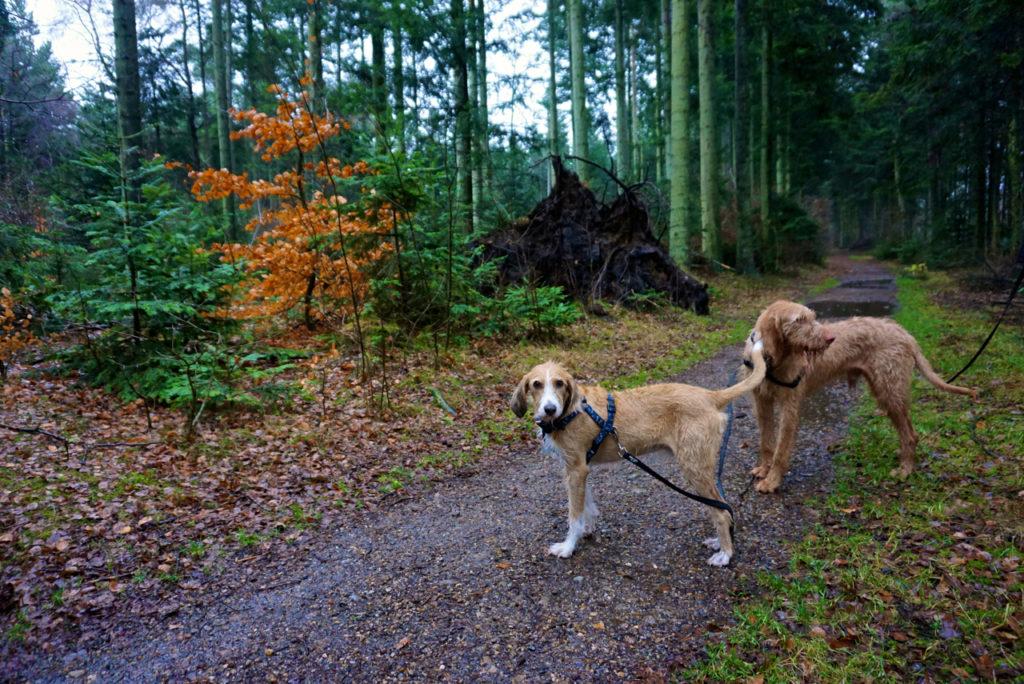 Hundewald - Dänemark mit Hund