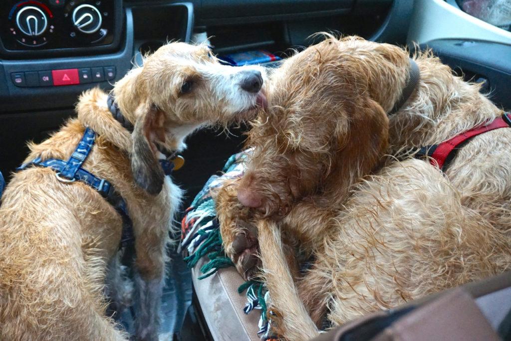 Nasse Hunde - Dänemark mit Hund
