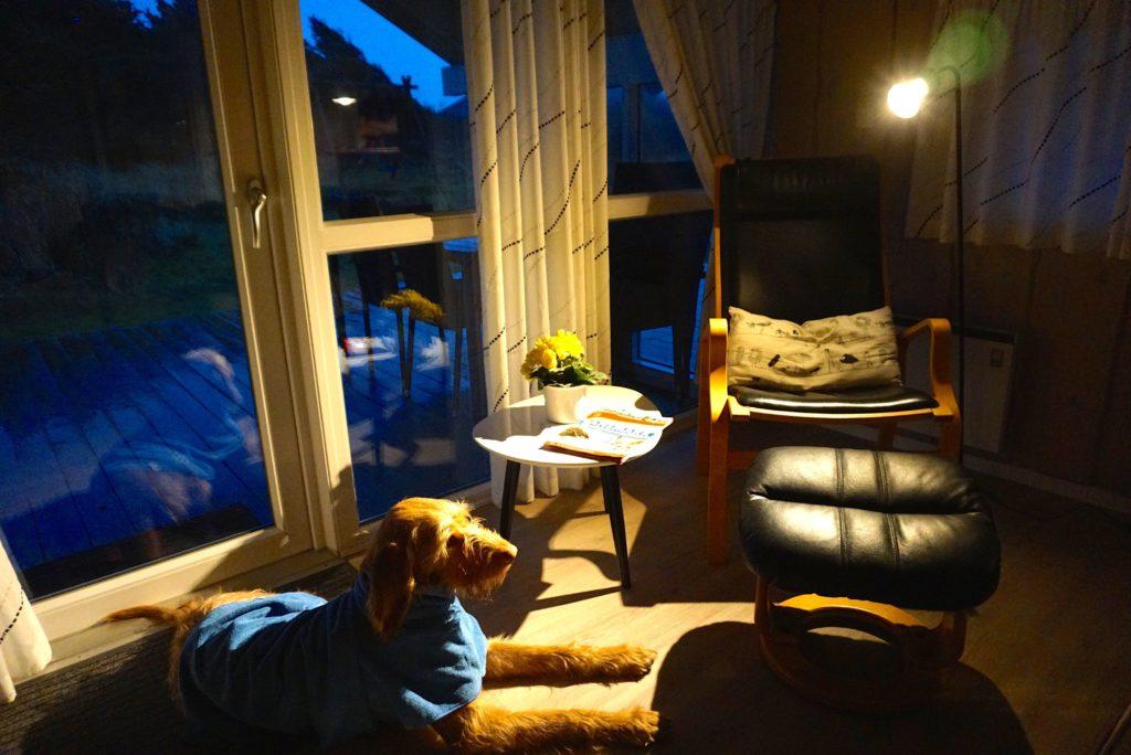 Hund im Ferienhaus