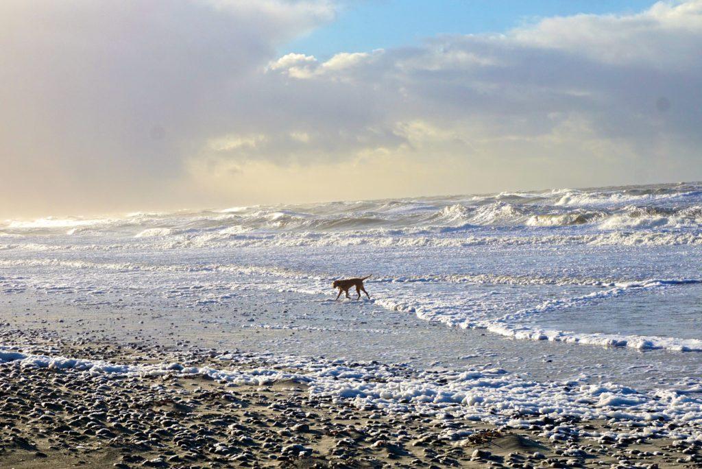 Hund im tosenden Meer
