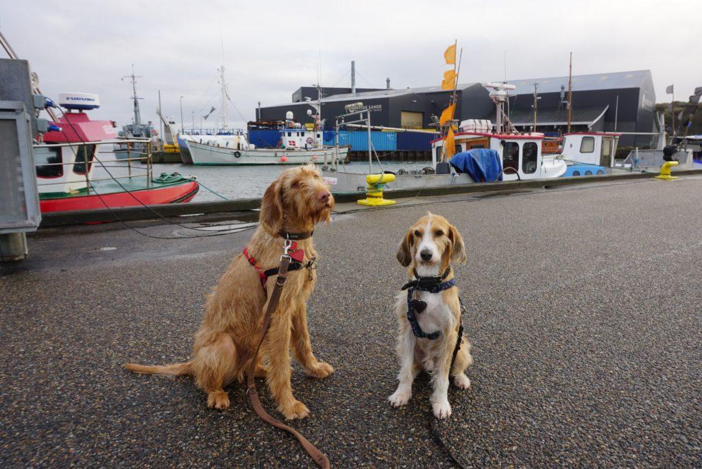 Hunde am Hafen von Hvide Sande