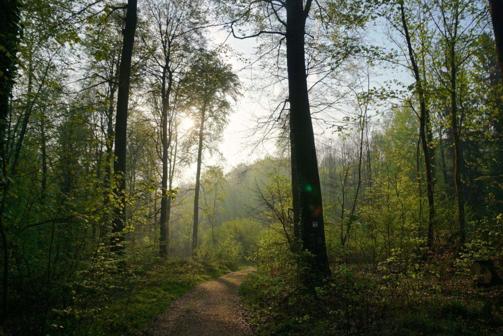 Der Teutoburger Wald mit Naturpark terra.vita