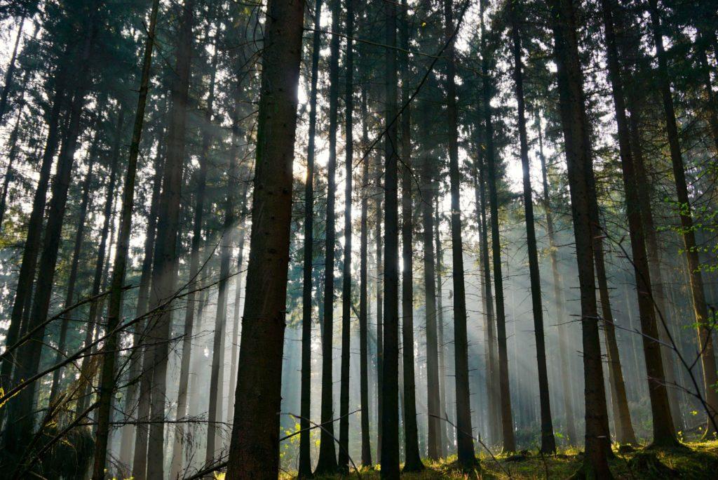 Morgenlicht im Teutoburger Wald