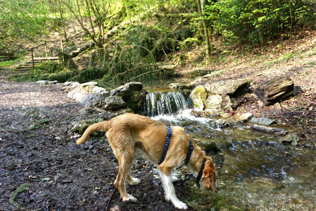 Hund auf dem terra.track