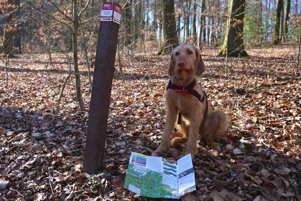 """Hund auf dem terra.track """"Von Quelle zu Quelle"""""""