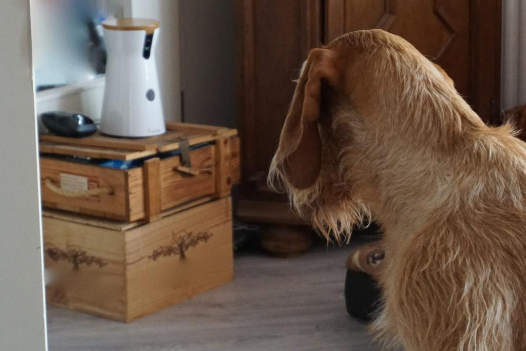 Auge in Auge mit der Hundekamera