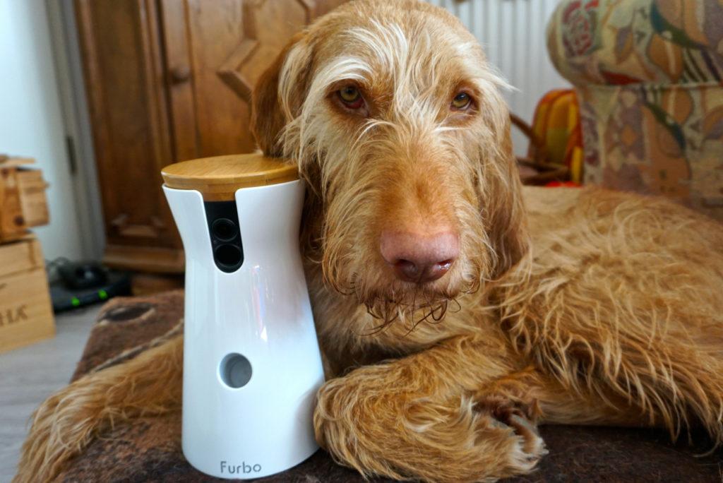 Vizsla János mag die Furbo Hundekamera