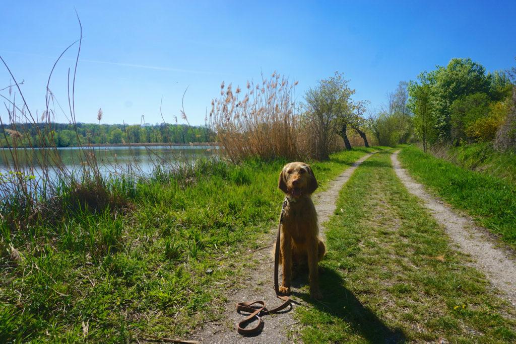 Hund an den Haselbacher Teichen
