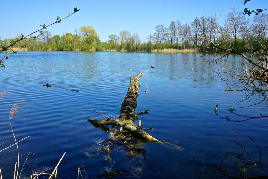 Baum schwimmt in den Haselbacher Teichen