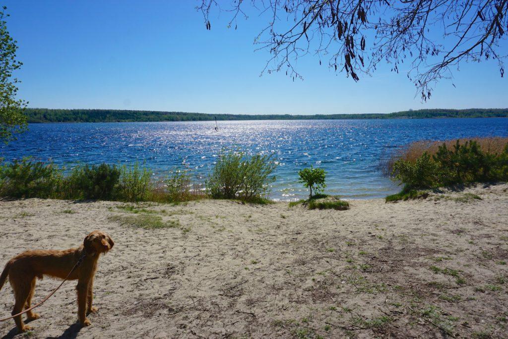 Schöne Strände gibt's am Haselbacher See