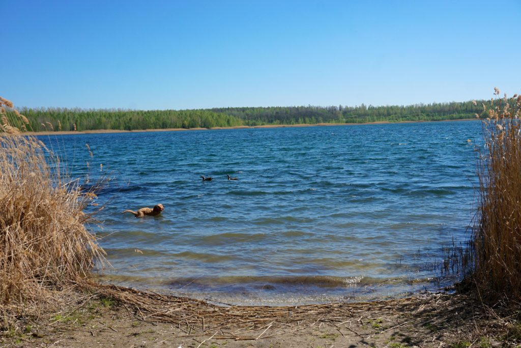 Hund schwimmt im Haselbacher See