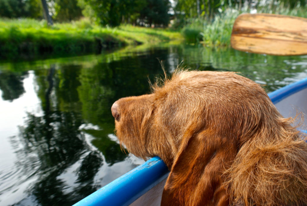 Mit Hund im Kanu durch Polen – tierisch-in-fahrt.de