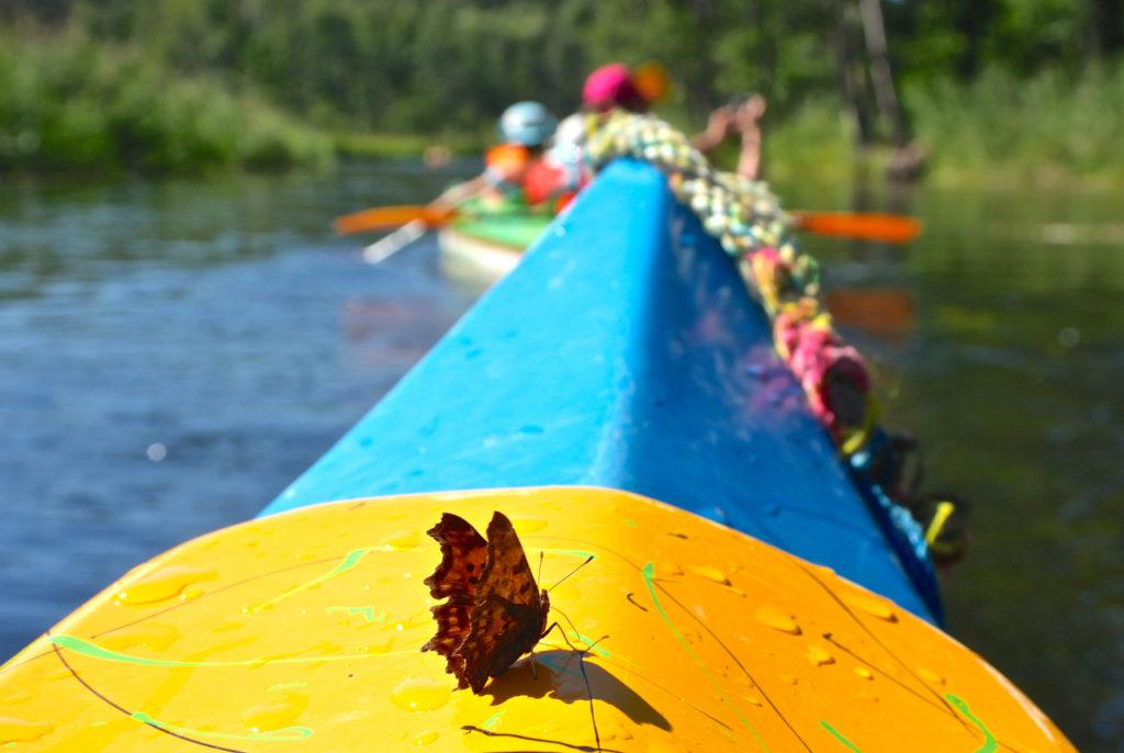 Tiereische Mitfahrer im Kanu
