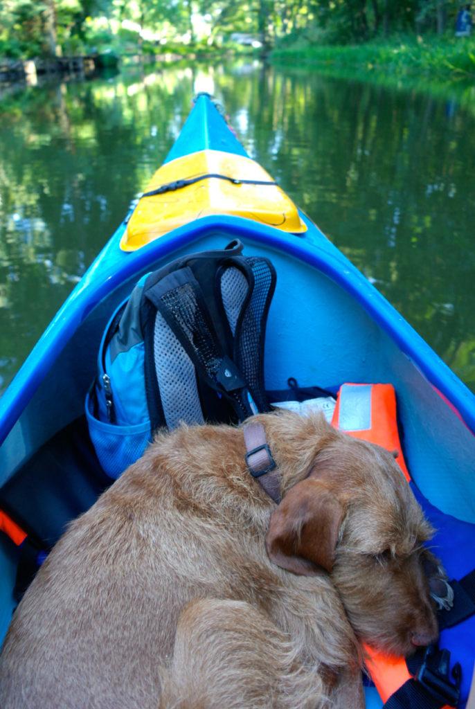 Hund schläft im Kanu