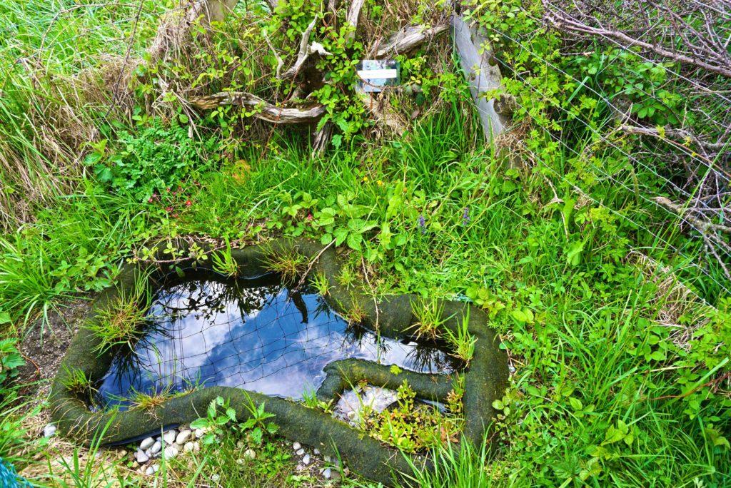 Amphibienteich im Naturgarten Kraftisried