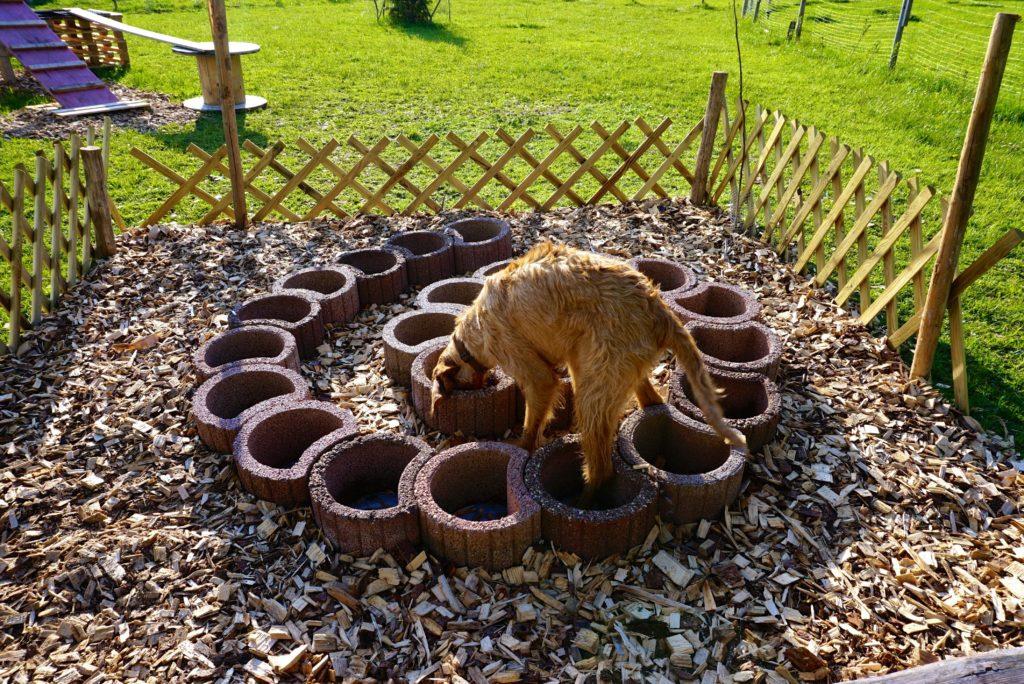 Suchspiel im Naturerlebnisgarten für Hunde