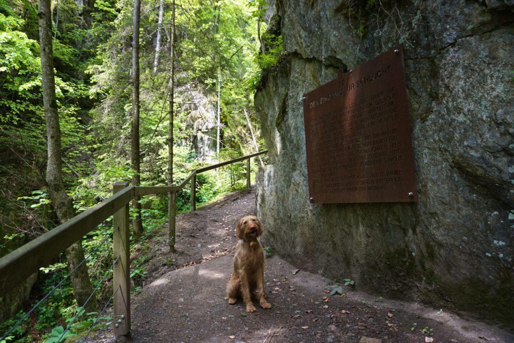 Hund am Eingang zur Barbarossaschlucht