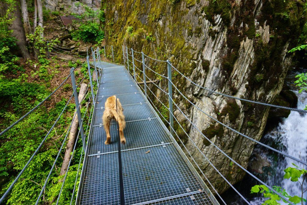 Mit Hund in die Schlucht – tierisch-in-fahrt.de