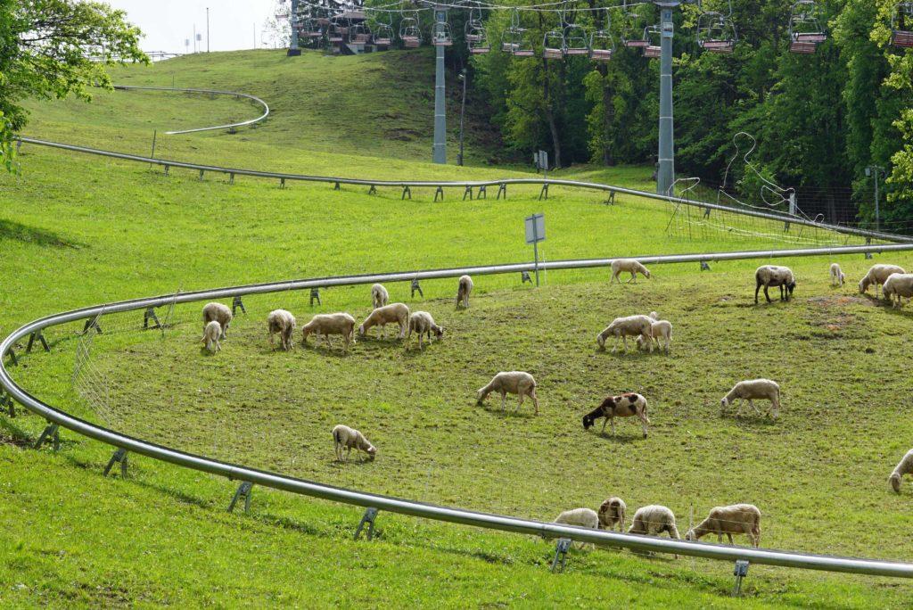 Sommerrodelbahn in Bled, tierisch-in-fahrt.de
