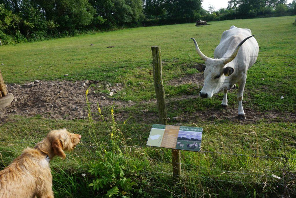 Hund und Rind, tierisch-in-fahrt.de