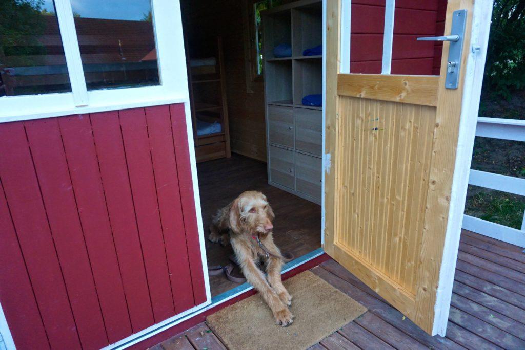 Hund in Hütte, Arche Warder, tierisch-in-fahrt.de