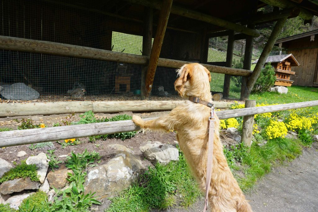Tierpark mit Hund