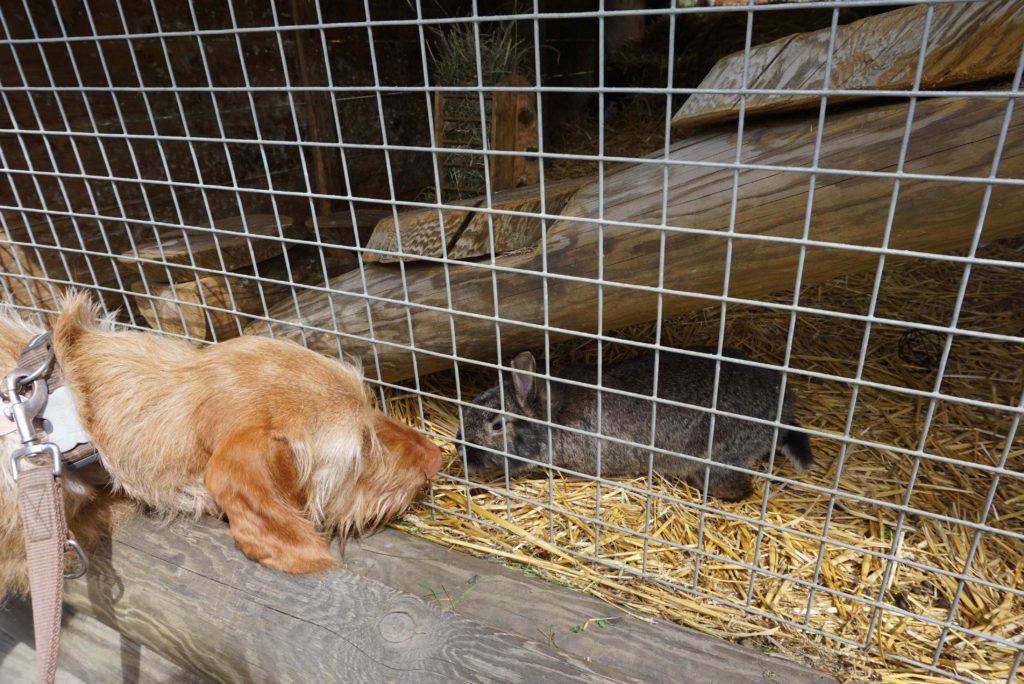 Hund und Kaninchen – Tierpark mit Hund