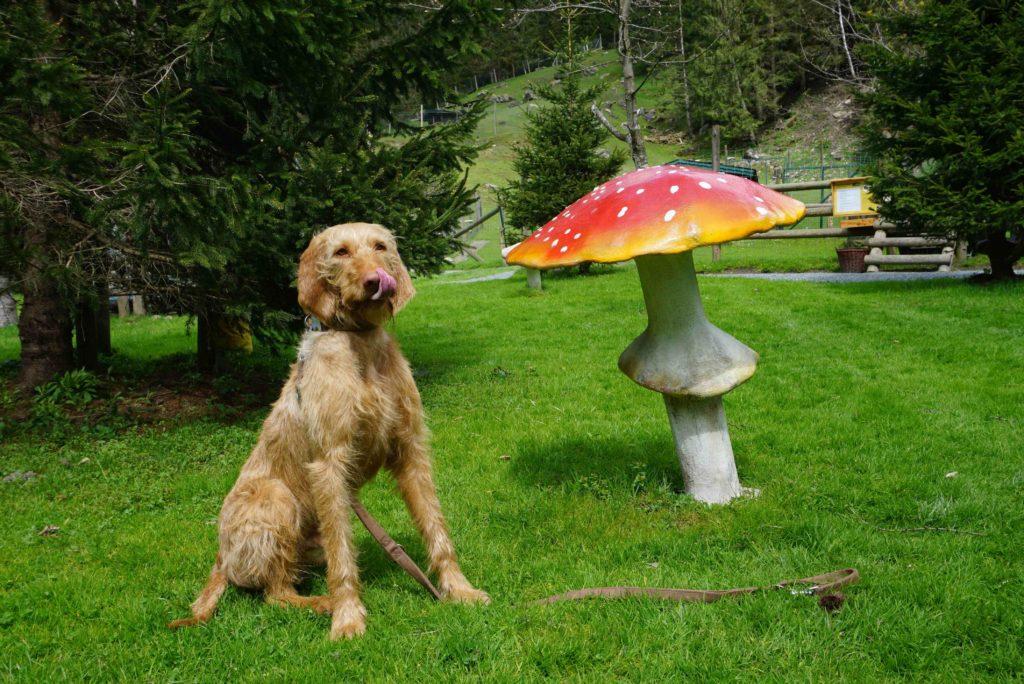 Hund und Pilz – Tierpark mit Hund