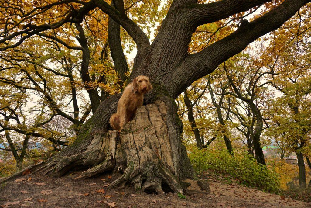 Hund auf Baum in Bad Freienwalde_tierisch-in-fahrt.de
