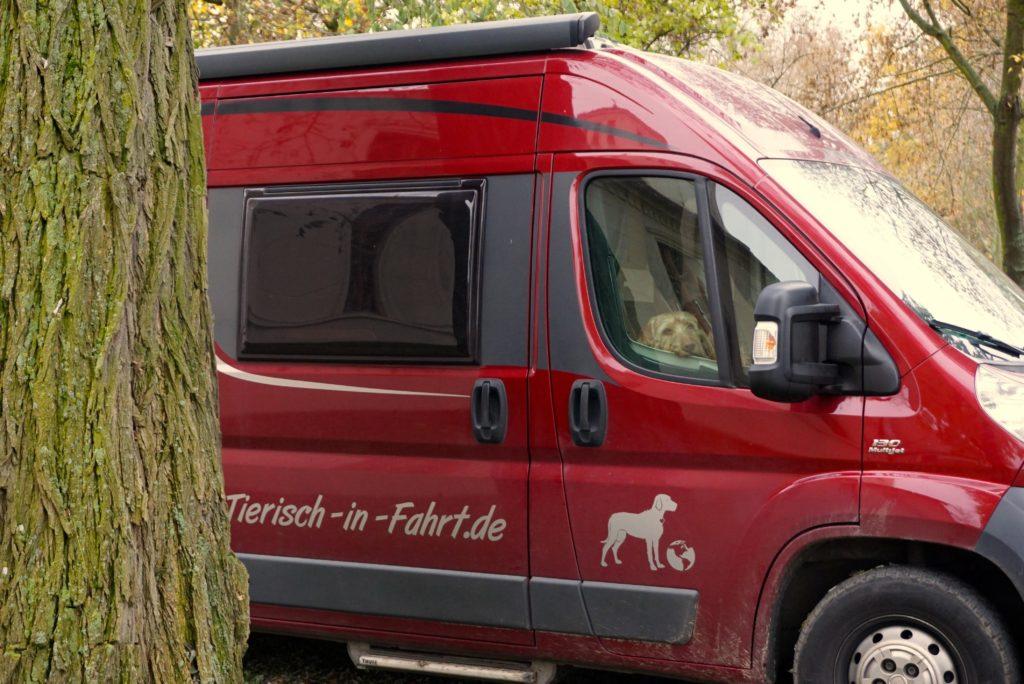 Hund im Van_tierisch-in-fahrt.de