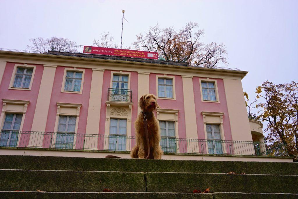 Hund vor Schloss Bad Freienwalde_tierisch-in-fahrt.de