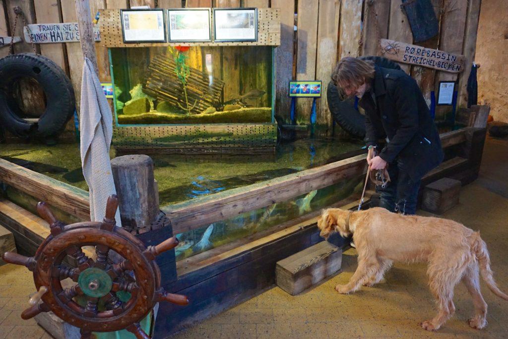 Mit Hund am Streichelbecken_tierisch-in-fahrt.de